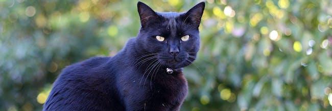 19. Black cat in the sunset