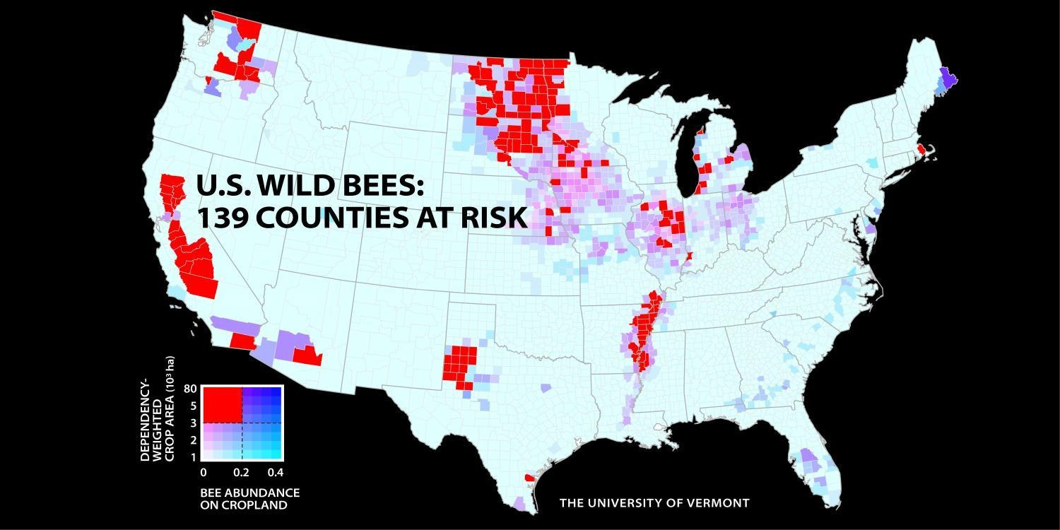a new study of wild bees identifies 139 counties in key agricultural regions of california the paci?rect=267%2C150%2C751%2C374&auto=format%2Ccompress&dpr=2&w=650 these maps show how bad it's become for u s bees inverse