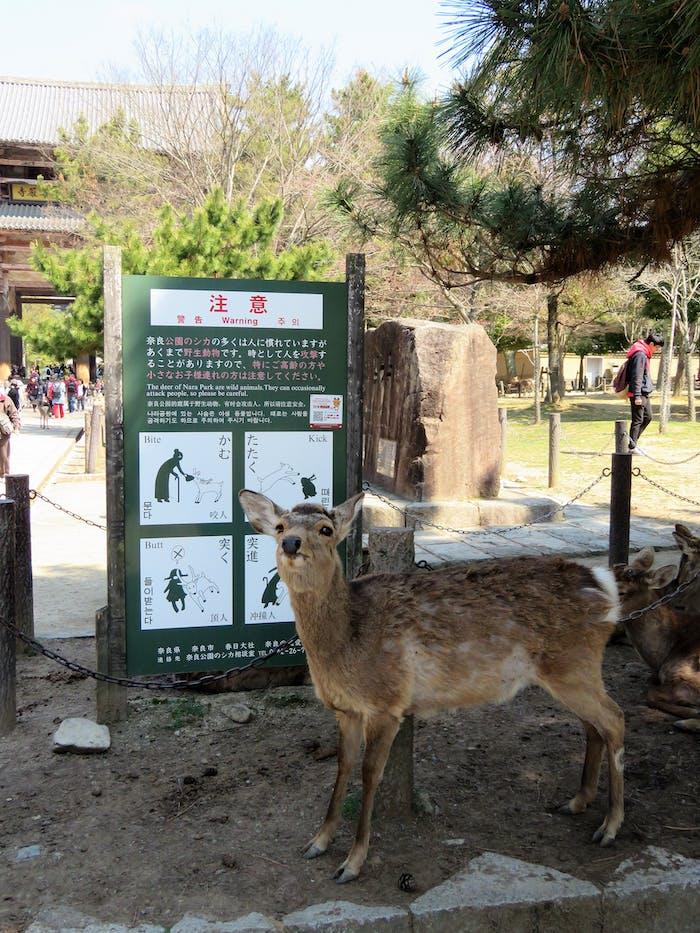 Nara Park Deer and Warning Sign