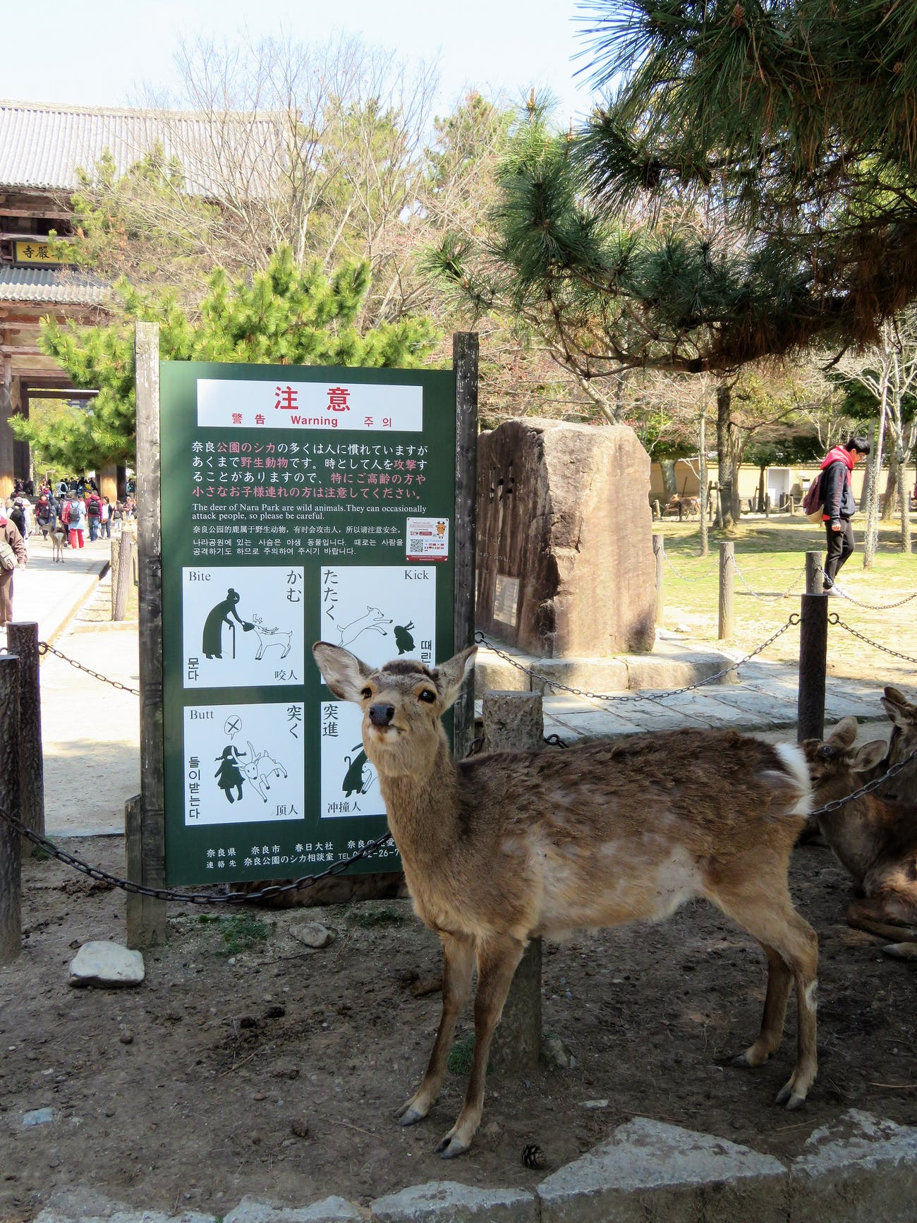Nara Park Deer and Warning Sign