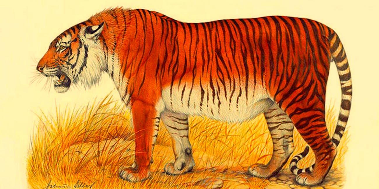Scientists want to bring back the Caspian tiger.