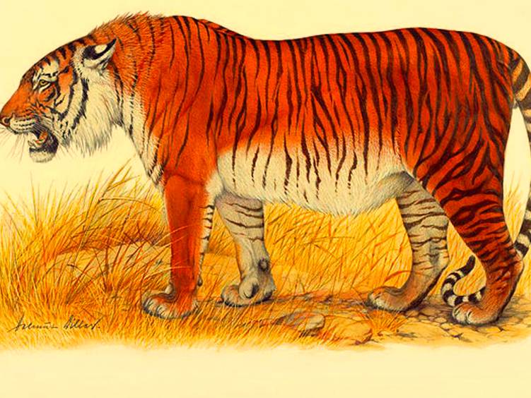 Scientists Want Extinct Caspian Tigers Back in the (Former) USSR