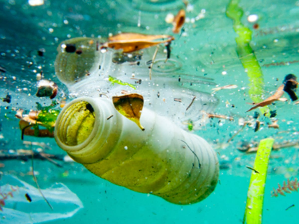 Microplastics in Seafood: Human Poop Reveals How Bad the Problem Has