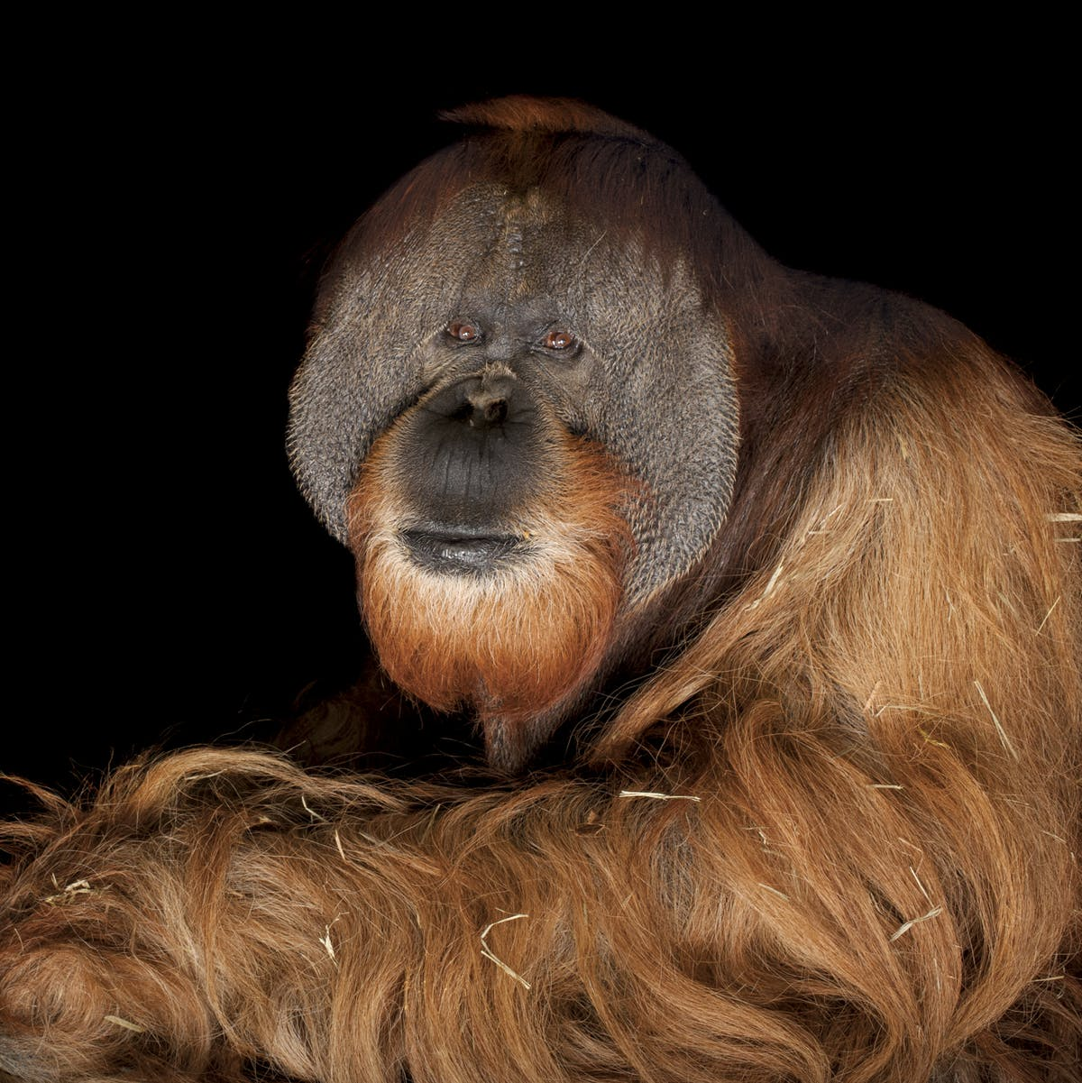 The amazing animal portraits by Joel Sartore reveal something truly special
