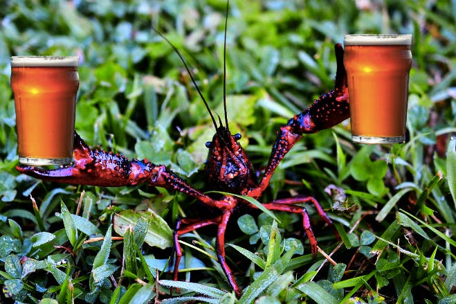 Crayfish parties: Better with friends.