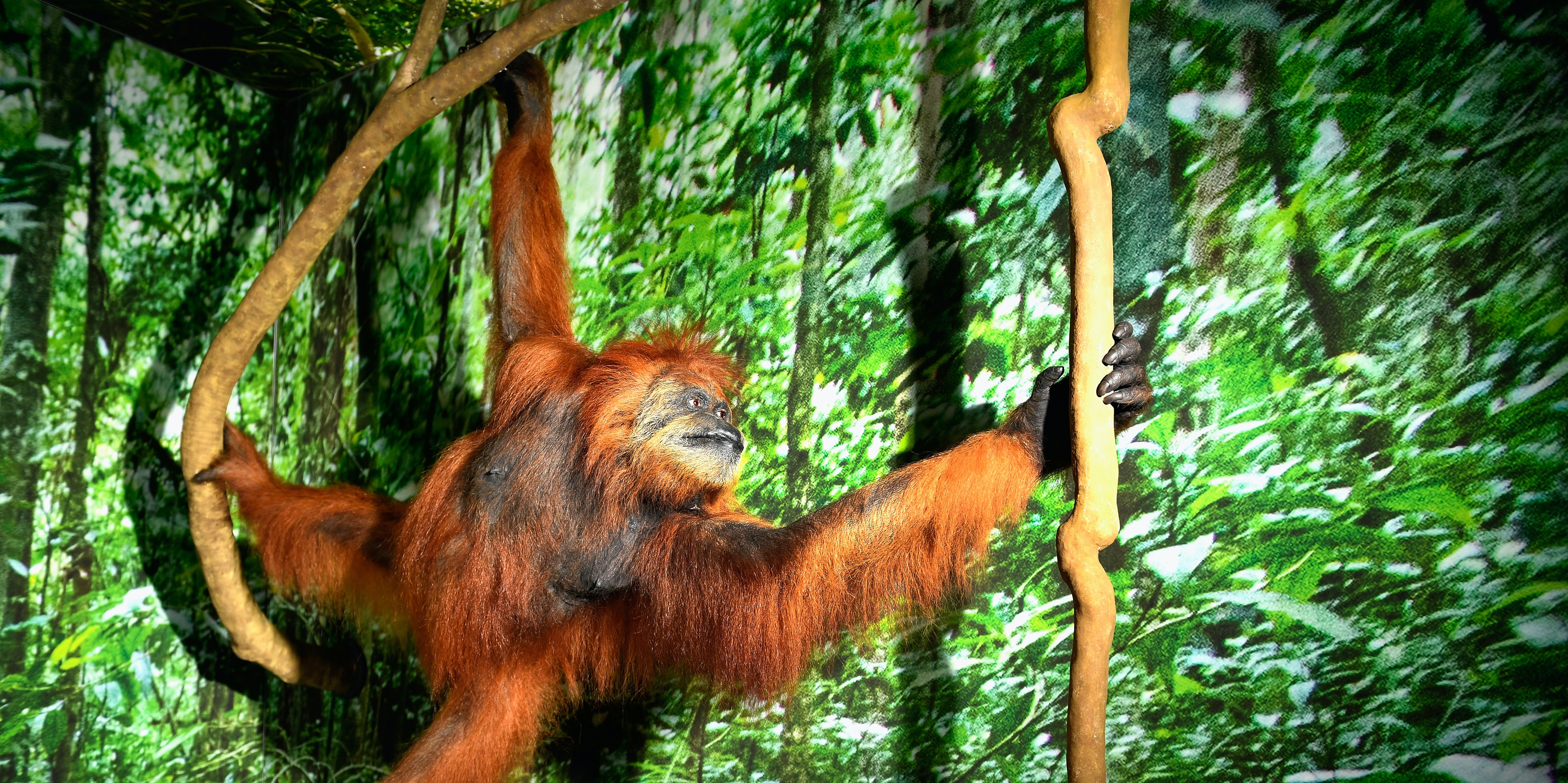 Great Apes Helpfully Correct False Beliefs of Humans