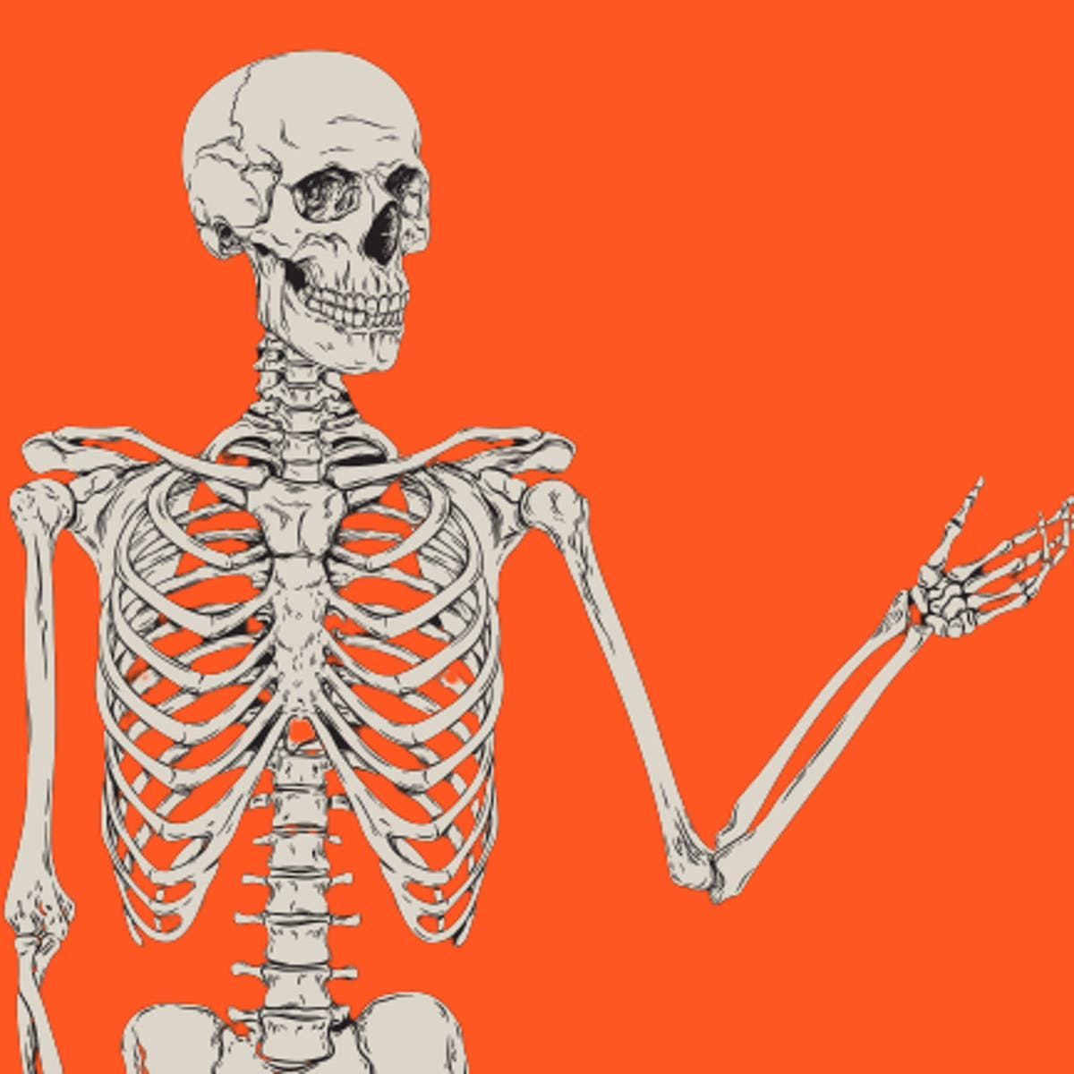 6 truly bizarre facts about the human skeleton