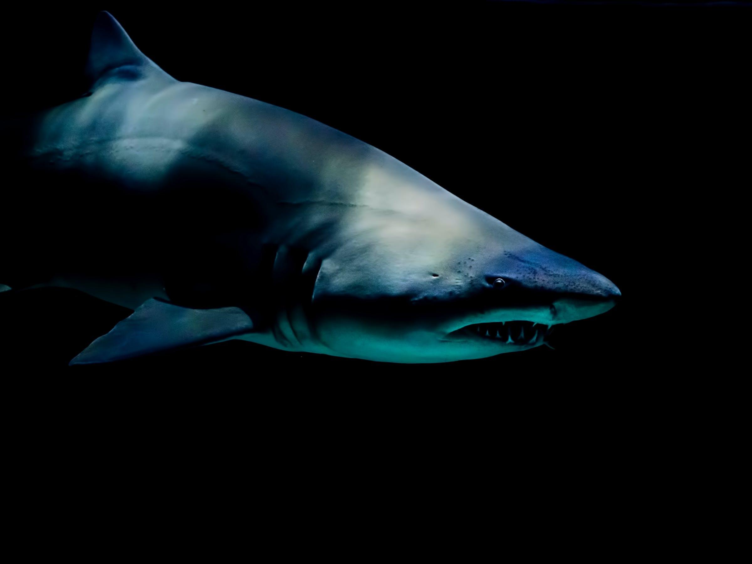 scary real shark