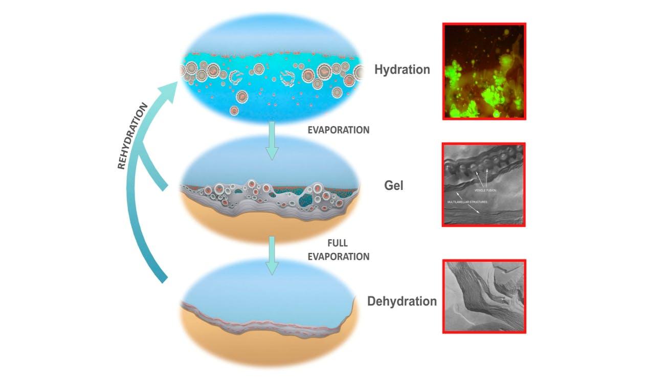 origin of life proto cells