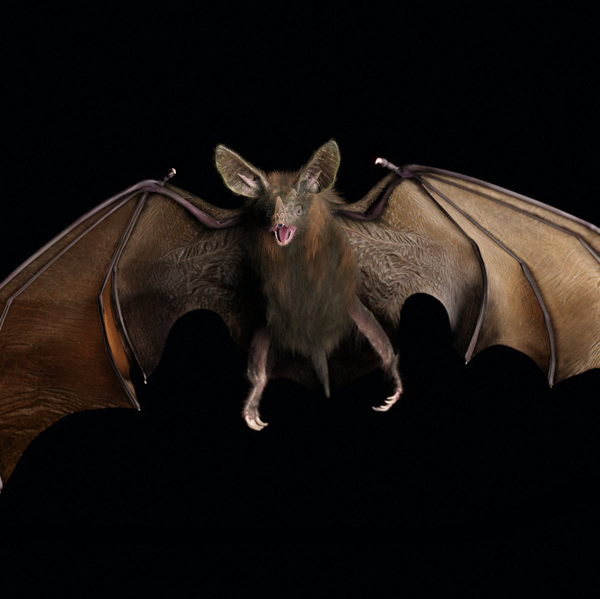 Meet friendly vampire bats: They drink blood, cuddle, and groom fellow bats