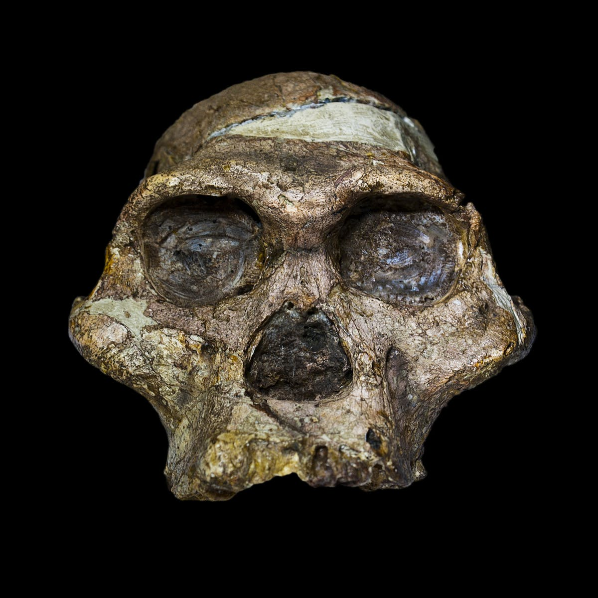 Ancient Genomes Reveal Complicated Split into Europeans and Asians