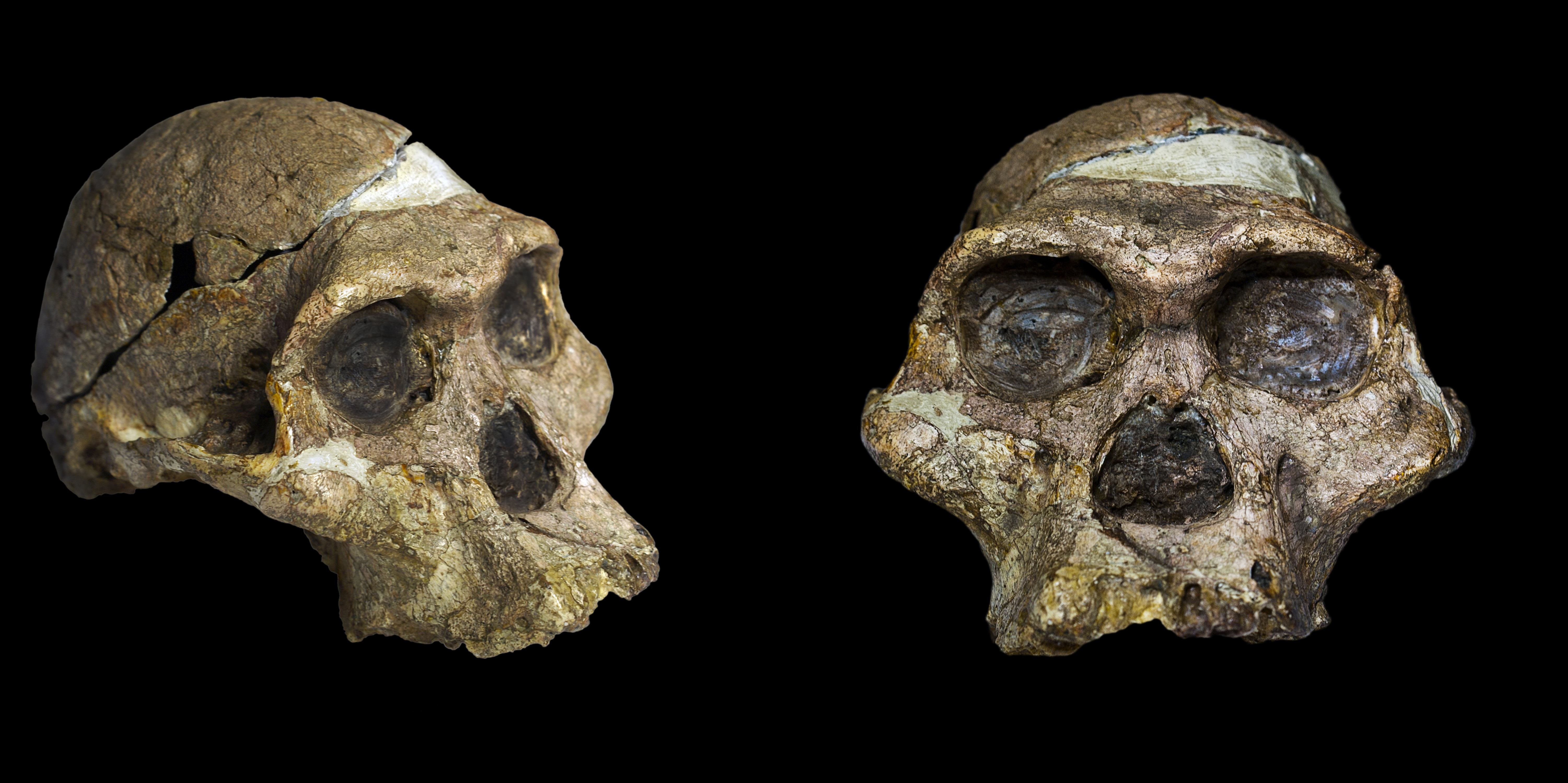 Ancient Human Genomes Reveal Complicated Split Into Europeans and Asians