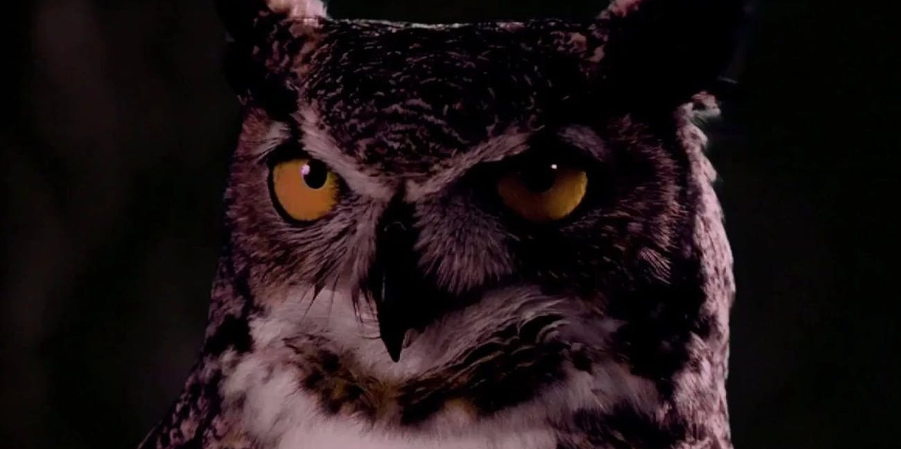 Stop wondering why they scare the hoot out of people at night.