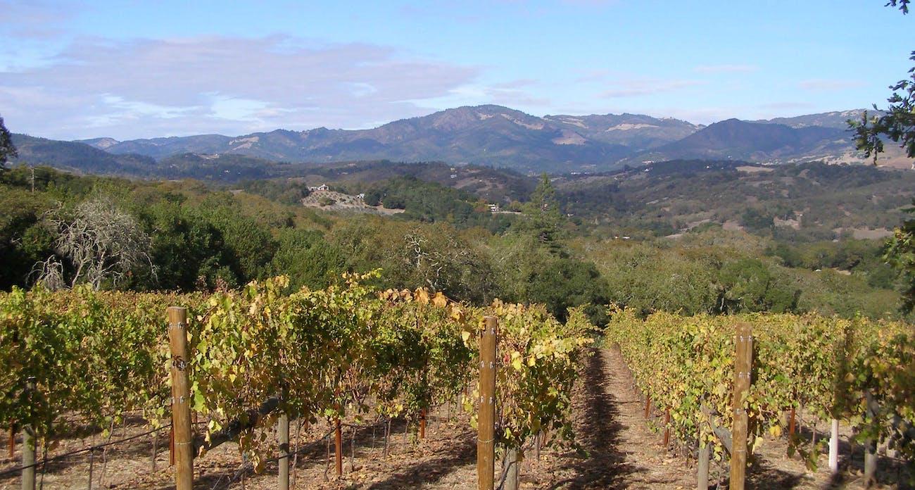 sonoma vineyard grapes