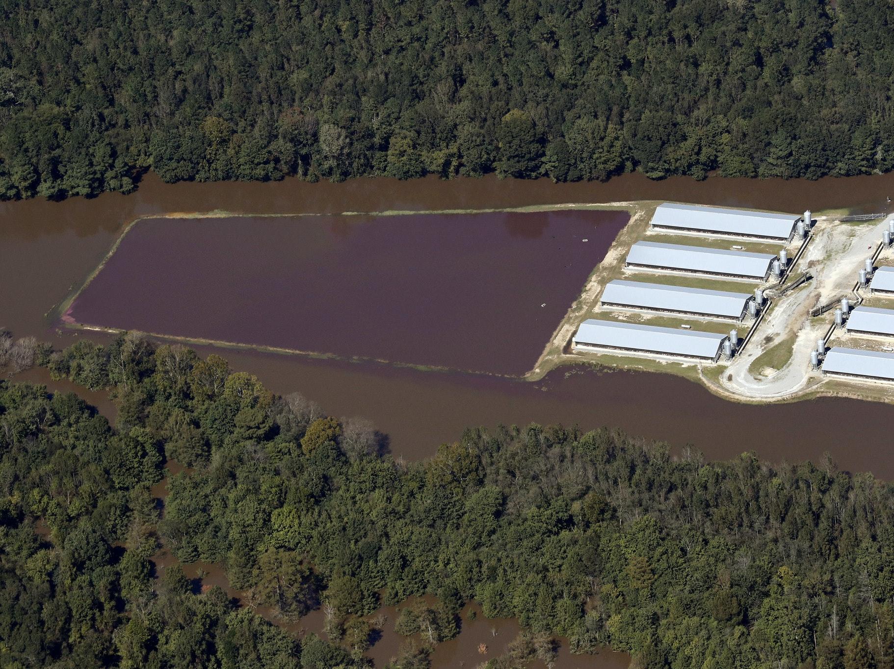 Hurricane Matthew Unleashed a Storm of Toxic Hog Poop