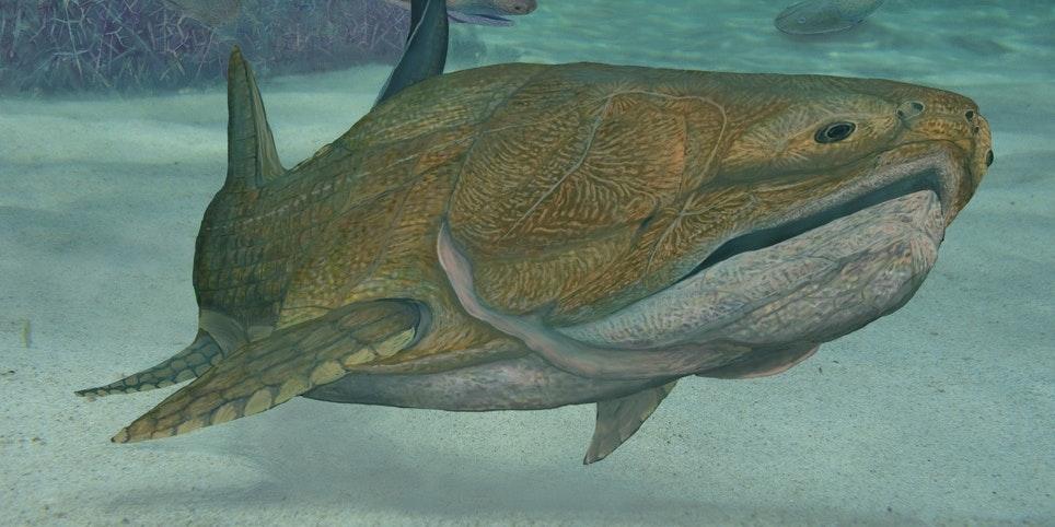 Entelognathus
