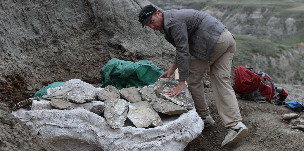 Canadian Museum of Nature dinosaur paleontology