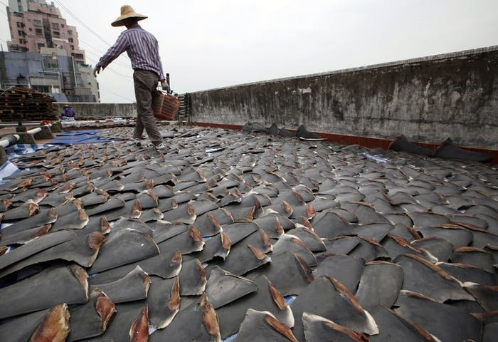 For centuries, shark fin, usually served as soup, has been a coveted delicacy in Chinese cooking.