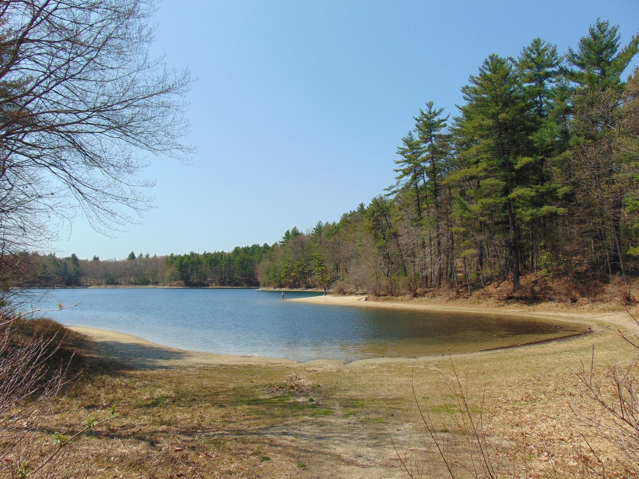 thoreau's cove walden pond
