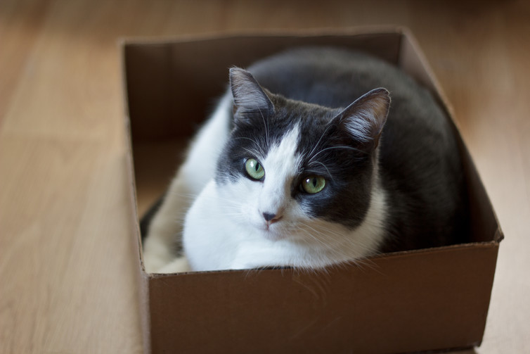 Availability of a cozy box is part of a well-appointed space for a cat.