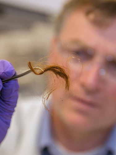 Glendon Parker, a  biochemist with Lawrence Livermore National Laboratory's Forensic  Science Center, examines a 250-year-old archaeological hair sample that  has been analyzed for human identification using protein markers from  the hair.