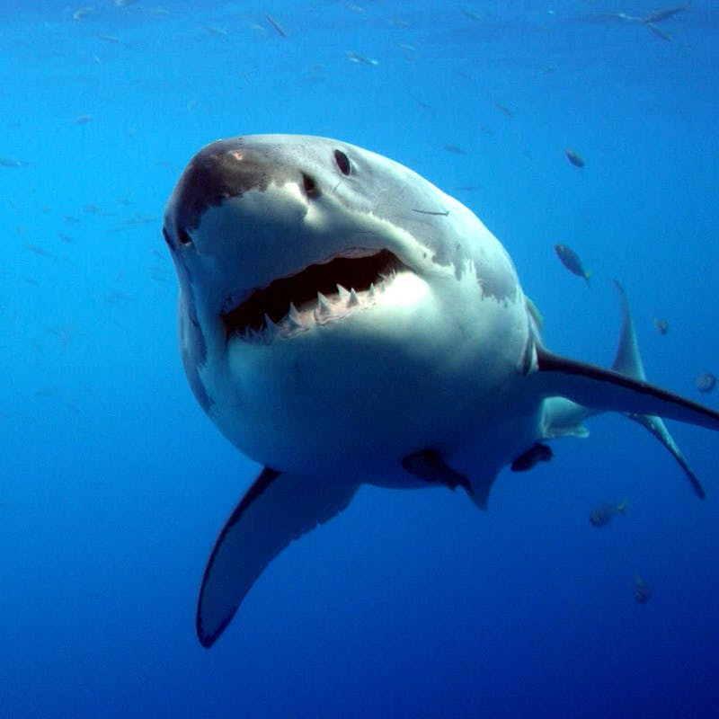 61 year old man fights cape cod shark in unconventional but