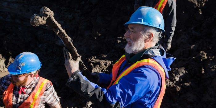mammoth excavation at bristle site