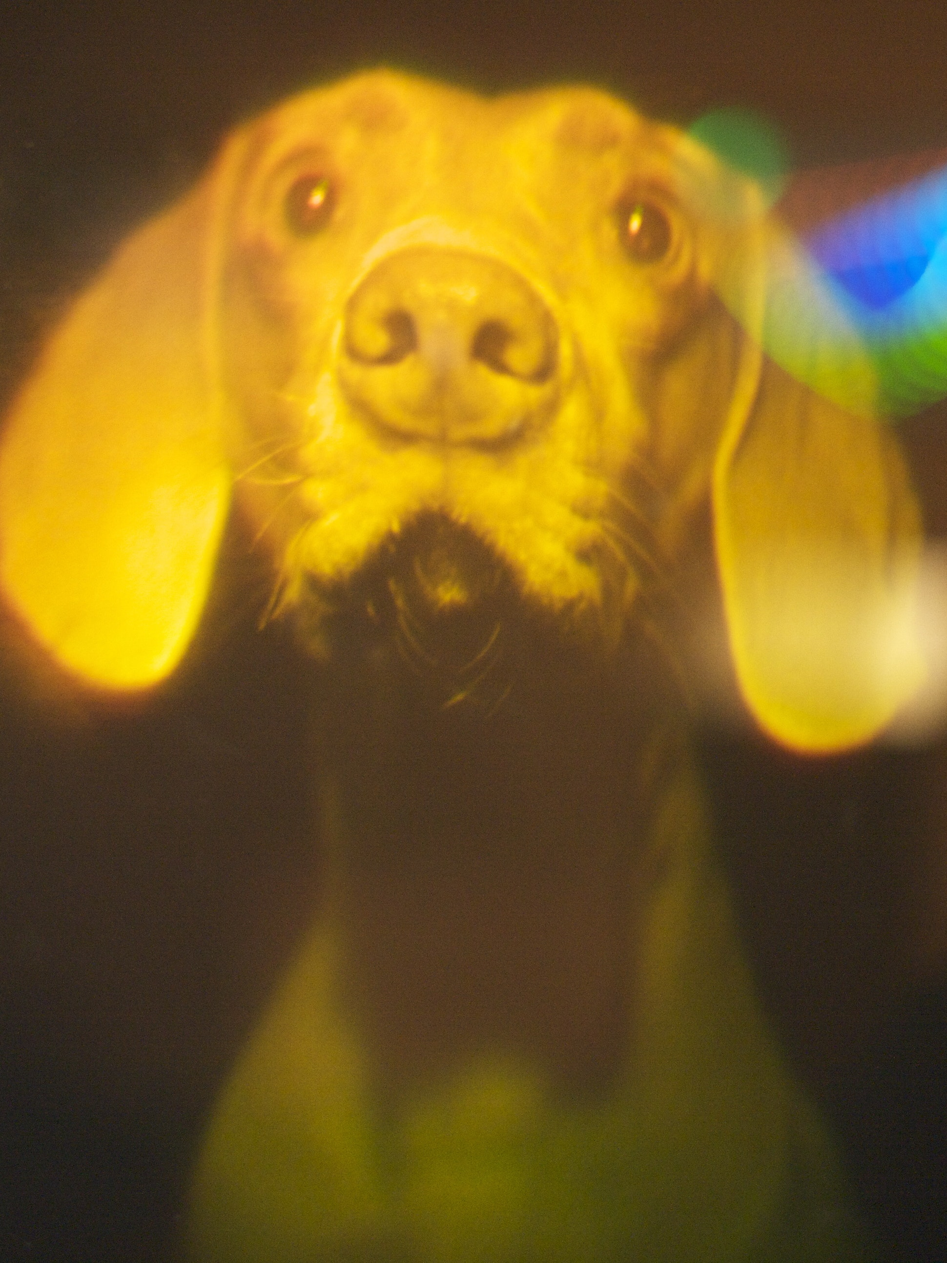 The dog hologram is man's best augmented reality friend.