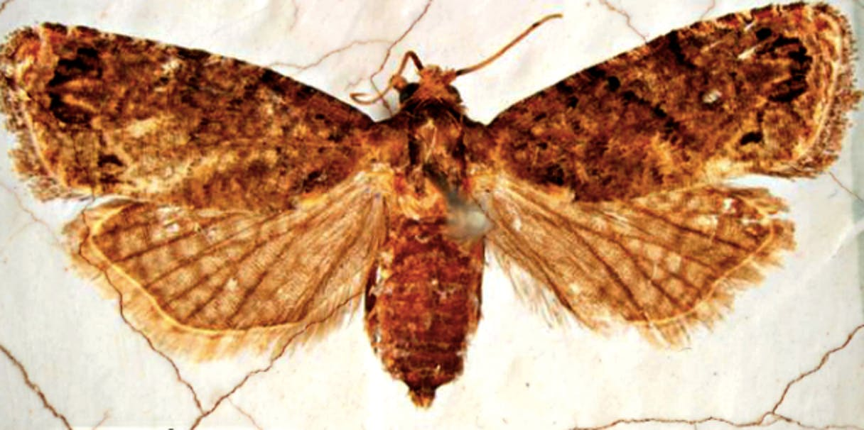 Butterfly and moth fossils identified by German scientists.