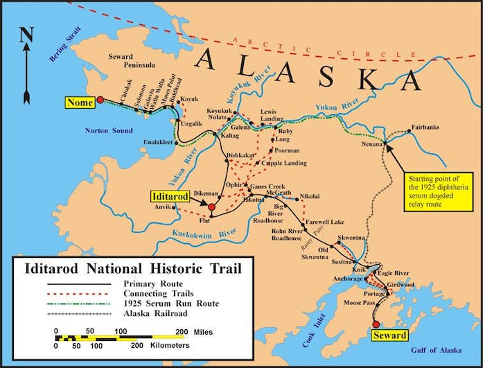 Balto led Gunnar Kaasen's dog team over the final leg of the trail from Nenana to Nome.