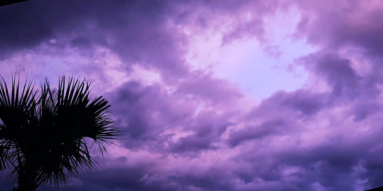 Purple sky over parking lot with palm trees