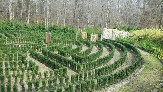People have located John B. McLemore's hedge maze from S-Town and are looking to save it.