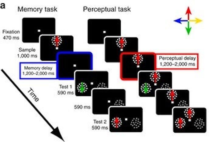 graph memory perception science task macaque prefrontal cortex