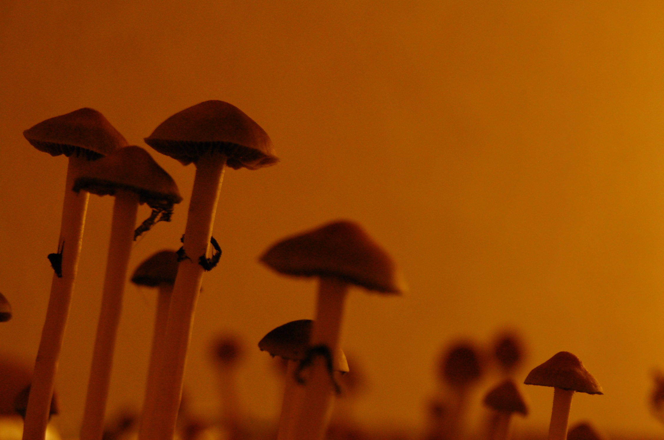 Magic Mushrooms Are Legal in New Mexico: How 'Bout That