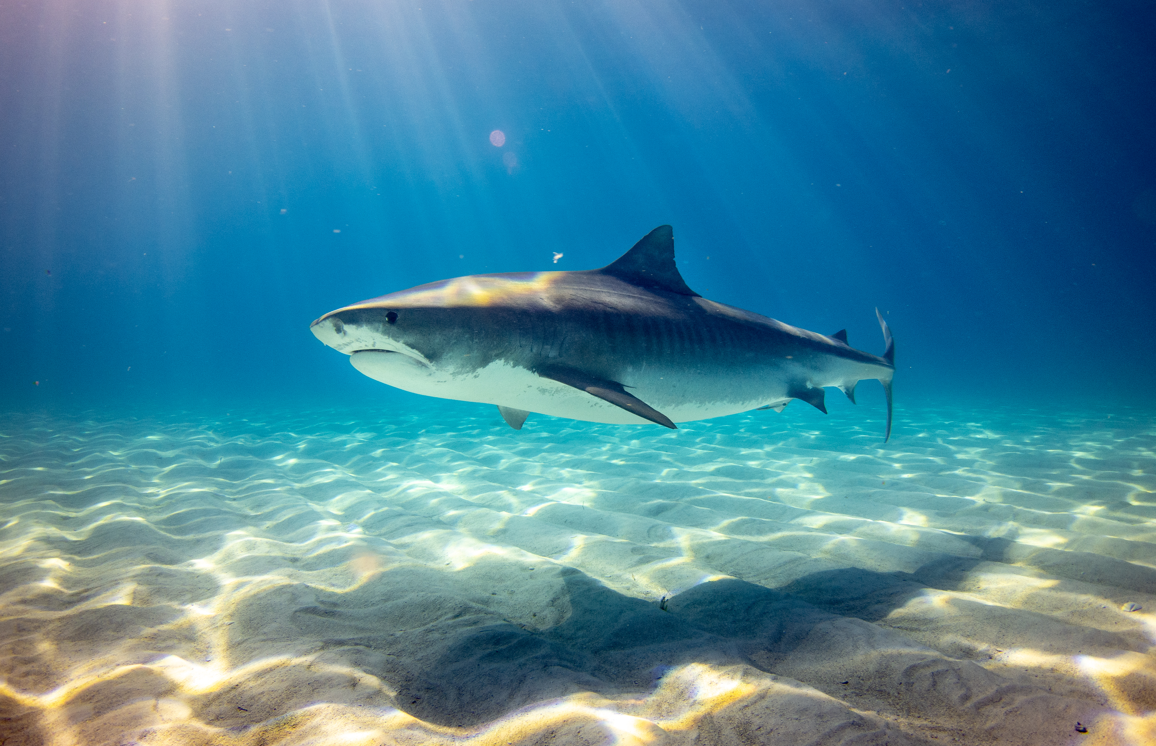 The Best Way to Escape a Shark When You're '47 Meters Down