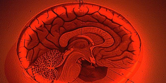 Neon Body Brain F