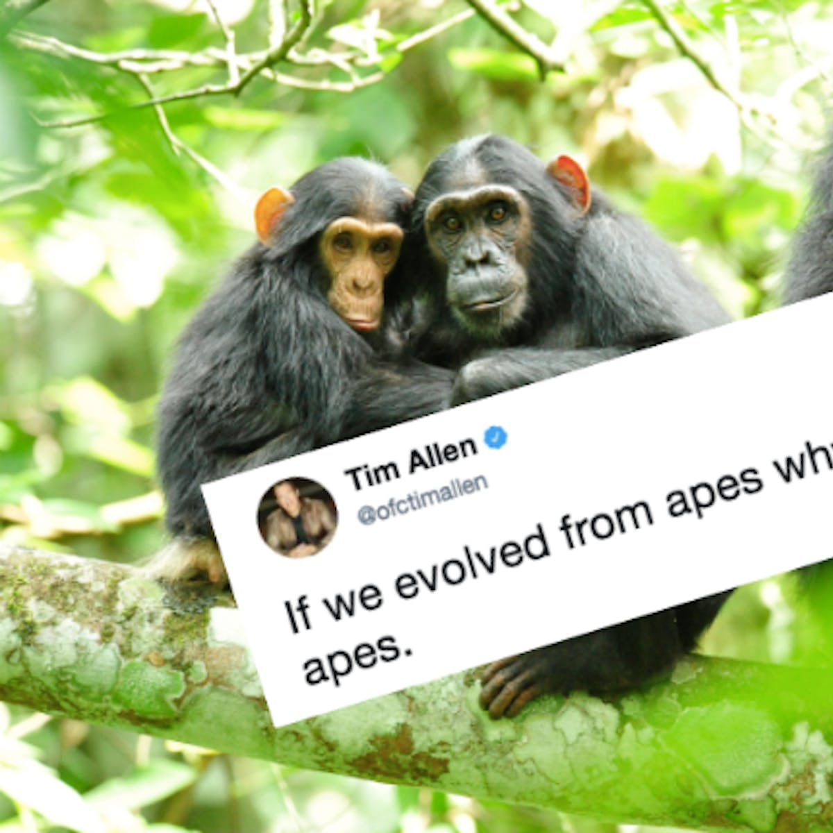 What Tim Allen's Existential Tweet Gets Very, Very Wrong About Human Evolution