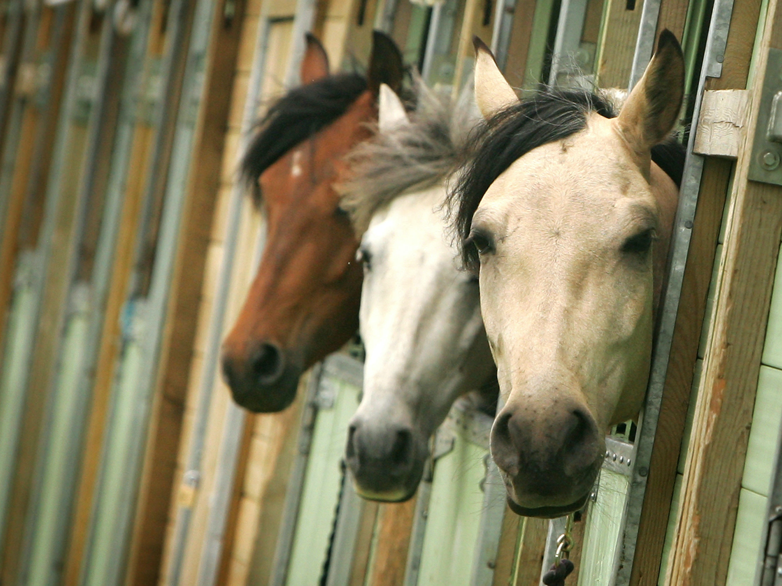 New Study Confirms That Horses Can Read Human Emotions