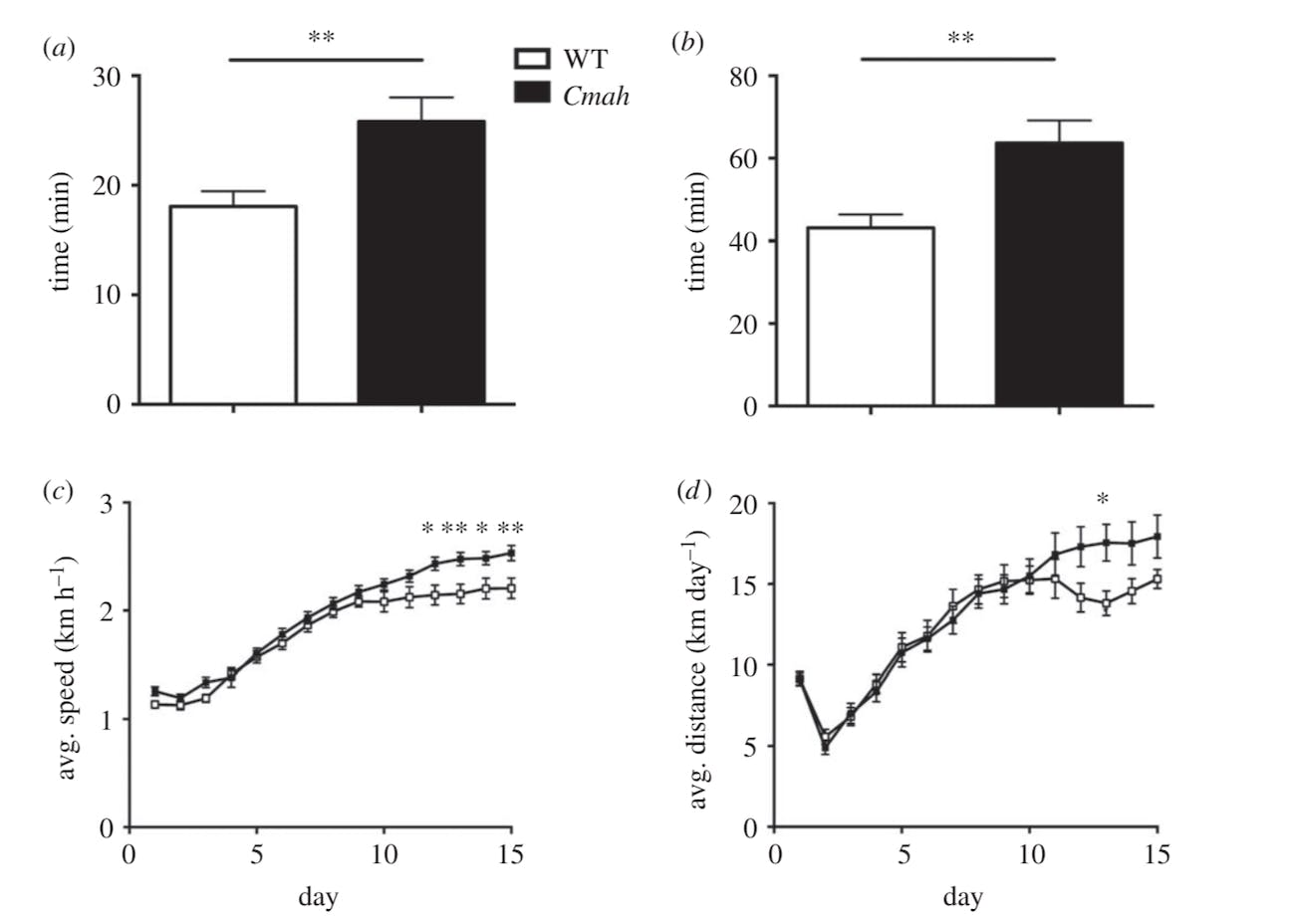 gene running exercise evolution