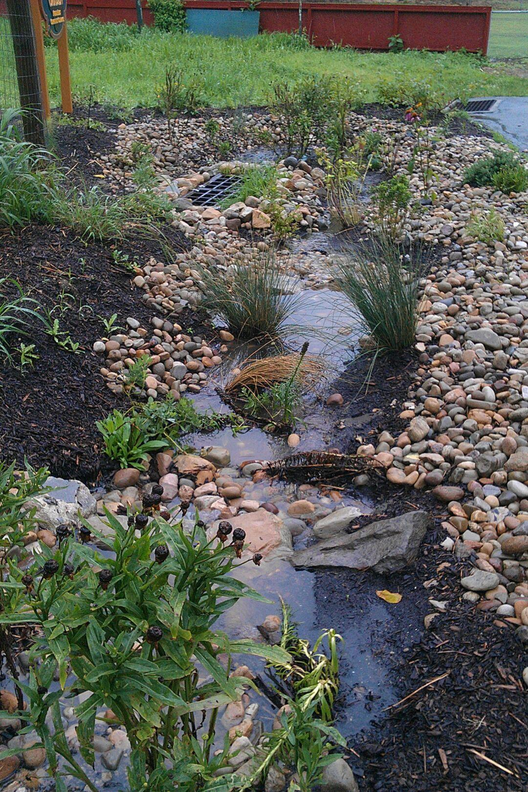 A bioswale for rain water management in Pittsburgh.