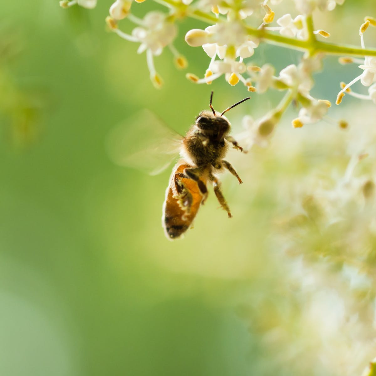 Pollinator biodiversity has wide-ranging benefits for farms