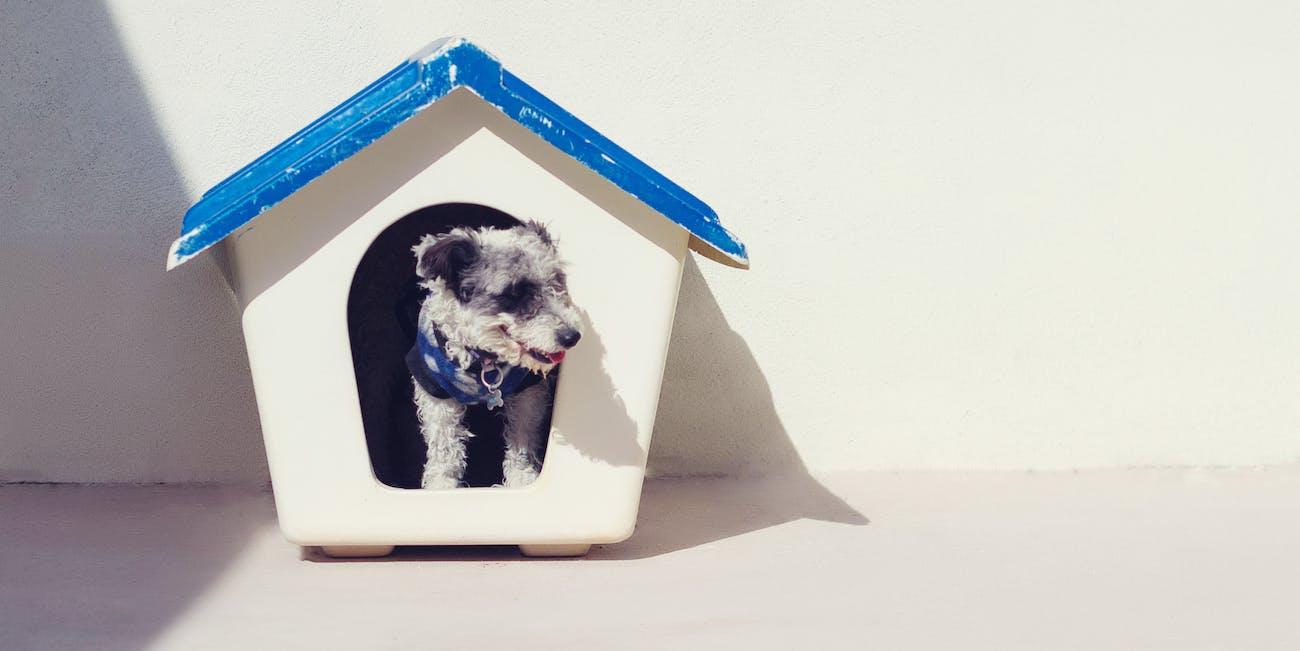 dog house canine small