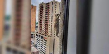 Raccoon climbs skyscraper