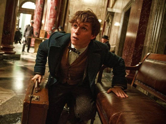 Everything You Need to Know About Newt Scamander