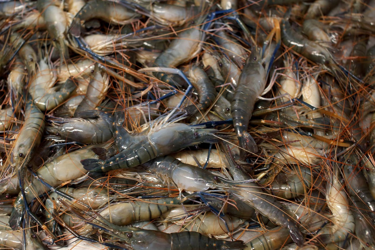 shrimps Bangladesh