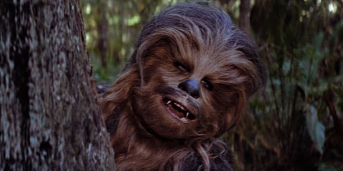 young chewbacca is actually old in star wars han solo movie inverse