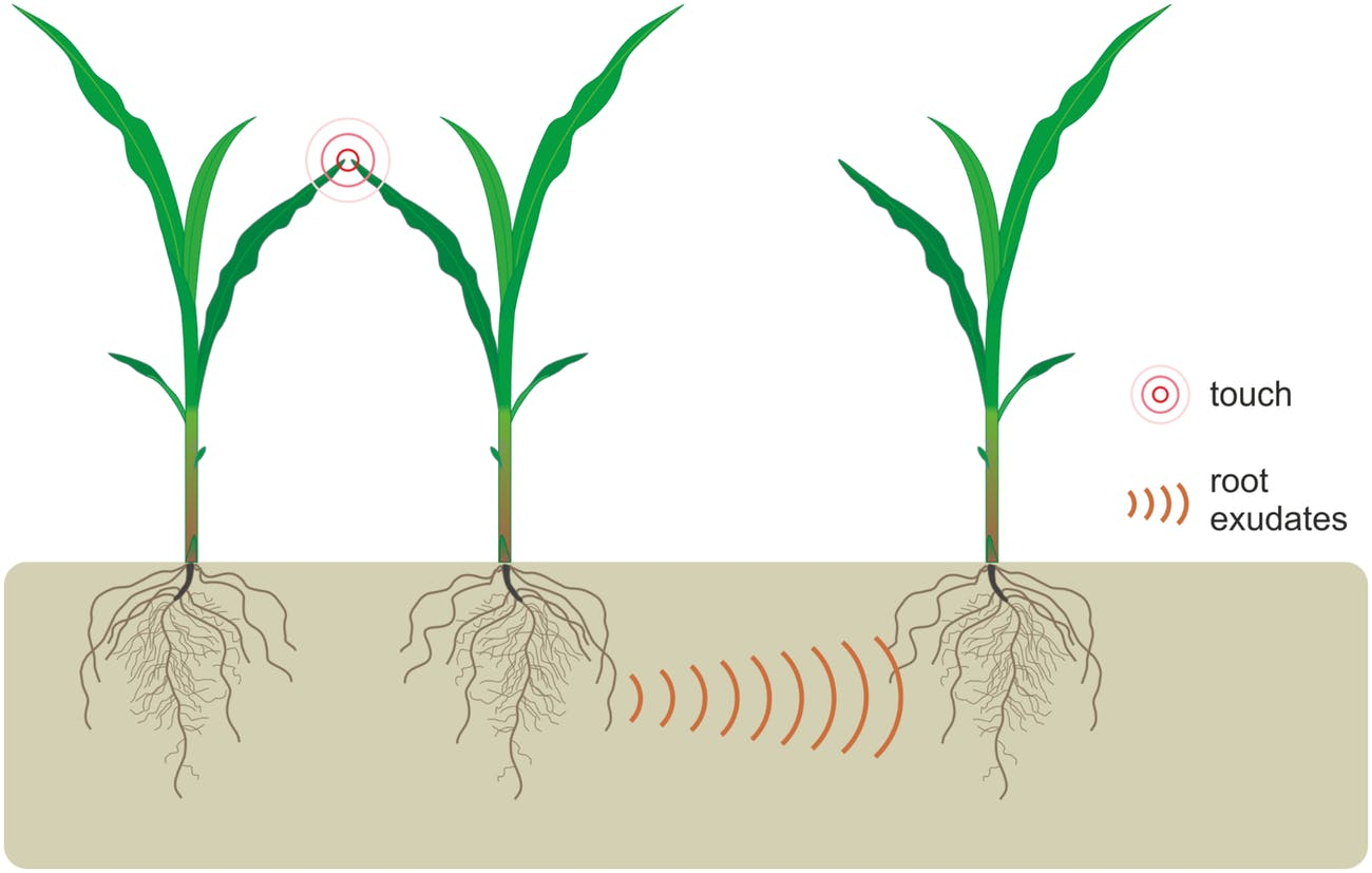 plant stress response