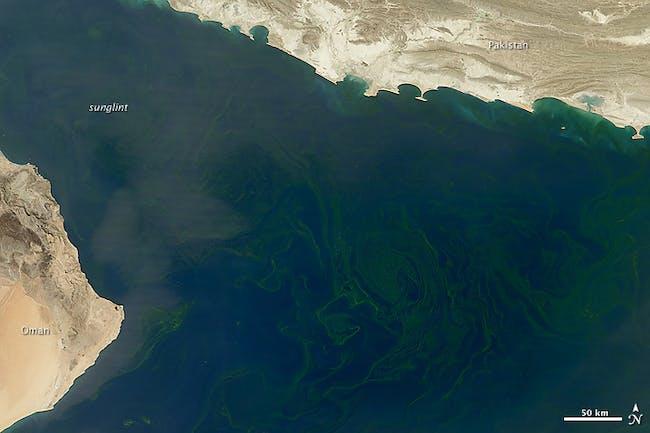Phytoplankton arabian sea