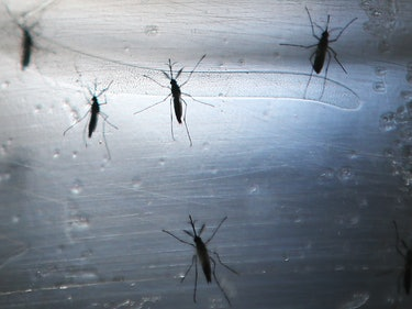 U.S. Army to Begin Human Zika Vaccine Trials Later This Year