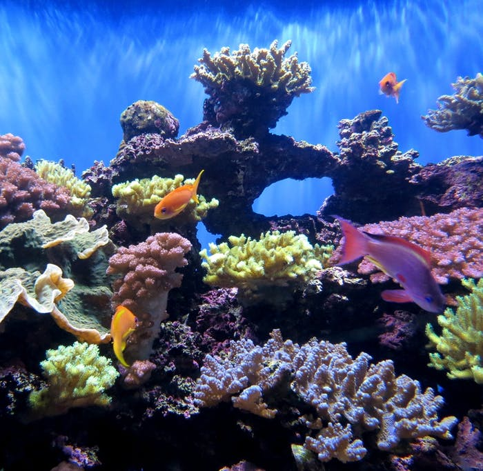 How Is Coral So Colorful In Netflix 39 S 39 Chasing Coral